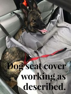 Wicked Training Your German Shepherd Dog Ideas. Mind Blowing Training Your German Shepherd Dog Ideas. German Shepherd Names, German Shepherd Puppies, German Shepherds, German Shepard Training, Dog Seat Covers, Dog Training Techniques, Working Dogs, Dog Pictures, Animal Pictures