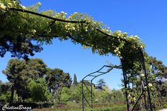 Rosa Trepadeira Deck, River, Nature, Outdoor, Climbing Roses, Rose Trees, Garden, Templates, Shrub