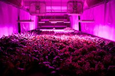 A Former Chicago Meatpacking Plant Becomes a Self-Sustaining Vertical Farm