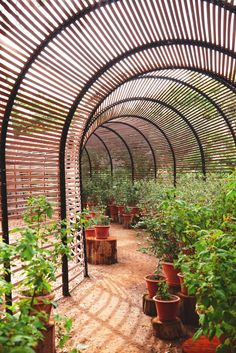 The 'puff adder' shade tunnel houses seasonal displays, from Clivias in spring to berries in summer.