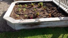 This is a raised bed seen in Southern California.