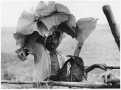 A man takes shade under the leaves of a teak tree. Central India - By celebrated photographer, Gianni Berengo Gardin. Mahatma Gandhi, Rural India, India People, Dream City, Great Photographers, His Travel, Monochrome Photography, Documentary Photography, Light And Shadow