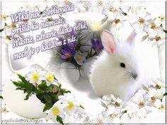Rabbit, Animals, Image, Animales, Animaux, Rabbits, Bunny, Bunnies, Animal