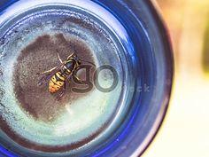 Bee-wasp http://igostock.com/item-photos/119-bee-wasp
