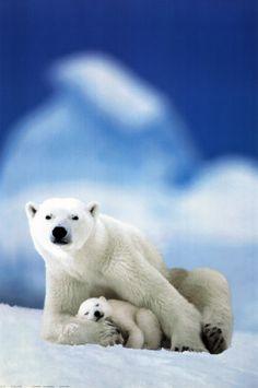 Mommy and Baby Polar Bears