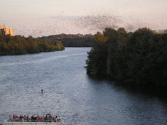 The best vantage point for the bats is to just stand on the Congress Bridge, but there are also boats you can rent out and hills to picnic on. Afraid of bats? Learn more about them because they are actually awesome and the population under the bridge eat 10,000–20,000 pounds of insects and pests each night (!).
