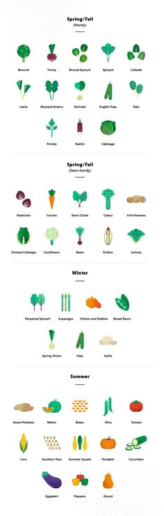 Want to know how to plant a vegetable garden? This guide for beginners will take you from start to finish on what you need to know & what to grow.