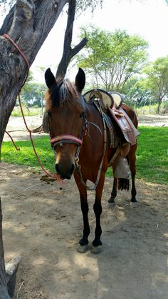 See 5 photos from 40 visitors to Pacora. Four Square, Travelling, Horses, Animaux, Horse