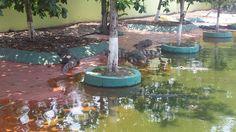 Feeding the crocodiles #suoitien