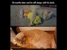 Forever a kitten