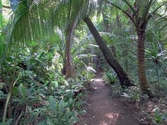 Lush vegation envelopes the path into the Oumagne Caves near the center of the Isle of Pines, New Caledonia, South Pacific. South Pacific, Lush, Paths, Paradise, World, Envelopes, Travel, Viajes, Pathways