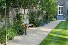 Fascinating Evergreen Pleached Trees for Outdoor Landscaping 65 Back Gardens, Small Gardens, Landscape Architecture, Landscape Design, Low Maintenance Garden Design, Backyard Ideas For Small Yards, Gravel Garden, Gravel Path, Small Garden Design