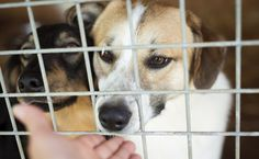 4 Common Myths About Shelter Pets Debunked
