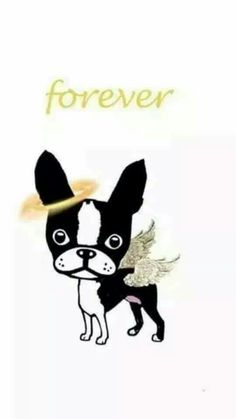Boston Bull Terrier, English Terrier, Boston Art, Daisy Mae, Terrier Breeds, Best Dog Breeds, Pet Loss, Happy Dogs, Dog Art