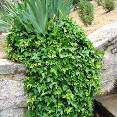 Plantes en pot : spécial sécheresse | Gamm vert | Deco balcon patio ...