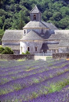 Lavender fields in Provence, France. Go to www.YourTravelVideos.com or just click on photo for home videos and much more on sites like this.