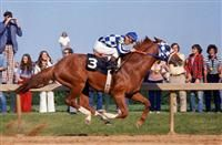 Mystery Woman Owns Secretariat DNA: His Family Tree Continues to Grow - Horse Racing Nation