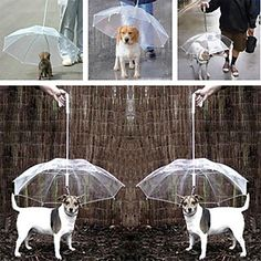 Pet Gift Transparent small dog Umbrella on eBid Canada Dog Umbrella, Dog Supplies, Small Dogs, Cosplay Costumes, Your Pet, Creatures, Stuff To Buy, Animals, Canada