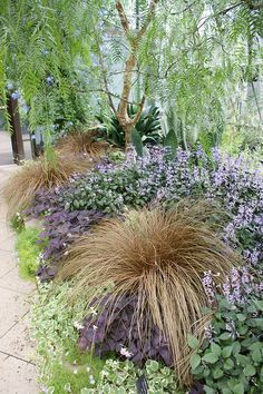 Carex 'Taffee Twist', Plectranthus 'Mona Lavender' by KarlGercens.com, via Flickr