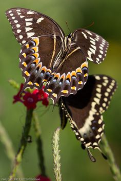 Angie #awesome #butterfly #beautiful nature #colour #amazing