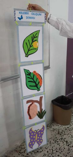 Butterfly Life Cycle, Life Cycles, Reggio, Montessori, Diy And Crafts, Kindergarten, High School, Preschool, Kids