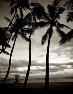 Hawaii 2012 Timeless 3006