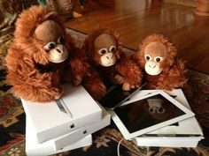 Orangutans you swingers. Now there's a Tinder for you     - CNET  Enlarge Image  The Apps for Apes program gives orangutans iPads for entertainment. Now tablets could help the animals find love.  Orangutan Outreach Samboja the orangutan is looking for a good man and like many singles these days shes turned to a mobile device to find it.  As part of an experiment called Tinder for Orangutans employees at the Apenheul primate park in the Netherlands plan to show Samboja images of eligible…