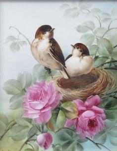 Les oiseaux dans leur nid