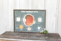 Vintage Anatomy of the Human Eye Poster / 1970s by WolfHouse, $60.00