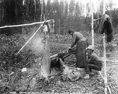 Chippewa Indians smoking and scraping buck skins, 1900