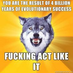 Thanks for the perspective, Courage Wolf.
