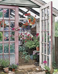 I want a greenhouse...but it would have to thrive on neglect, because I kill every plant I touch.