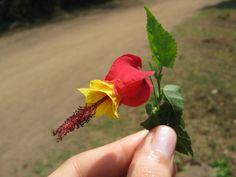 as flores que encontrei
