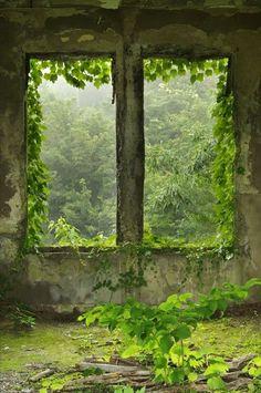 Una ventana abandonada puede llegar a ser la más bonita