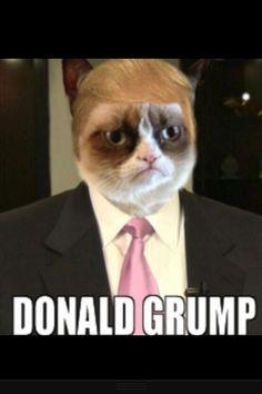Grumpy Cat: Donald Grump