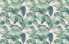 When it comes to latest interior trends, you can't go wrong with this Pink & Green Tropical Wallpaper, a cool leaf mural. Buy now with fast & FREE UK delivery! Pink And Green Wallpaper, Pink Wallpaper Desktop, Palm Leaf Wallpaper, Tropical Wallpaper, Wallpaper Murals, Computer Wallpaper, Botanical Interior, Cute Laptop Stickers, Pink Leaves