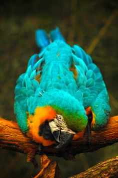 Travels Spot: Blue & Gold Macaw