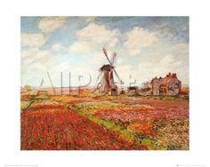 Tulip Fields with the Rijnsburg Windmill Landscapes Art Print - 51 x 41 cm