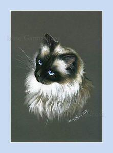 Ragdoll-Cat-Print-Ragdoll-3-by-Irina-Garmashova