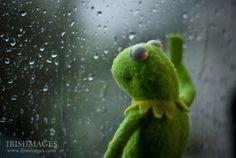 Kermit the Frog Looking Out Window Memes