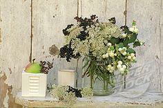 Elderberries Elder flower and snowberries - perfection!