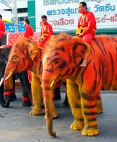 painted like tigers to celebrate the Chinese New Year in Ayutthaya, Thailand