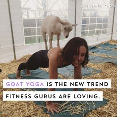 Want to get your namaste on with baby goats? Watch this video to find out everything you need to know about the latest fitness trend, goat yoga.