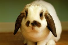 Bunny's mustache matches his ears - September 23, 2012