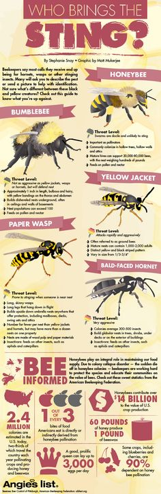 Infographic: Identifying honeybees from other stinging insects and other honeybee facts.