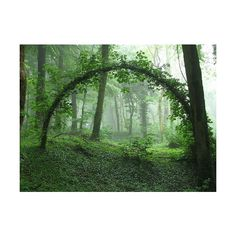see the wolrd ❤ liked on Polyvore featuring backgrounds, pictures, green, photos and nature
