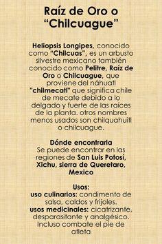 Raíz de Oro: Planta medicinal proveniente de la República Mexicana.