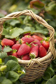 fresh-picked strawberries