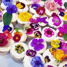 127 Likes, 39 Comments - Jeanne Flower Cupcakes, Have You Tried, Edible Flowers, Flower Beds, Carpet, Product Launch, Book Launch, Baking, Stylish