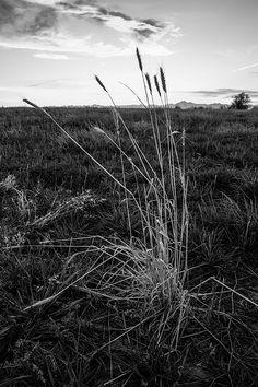 Empty field - Firestone, Colorado